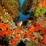 Ibiza: Ecosistema marino entre Ibizia y Formentera, entorno de la posidonia oceánica