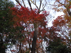 IMG_4652 (CLF) Tags: park autumn red fall leaves japan garden tokyo      arakawa       momoji