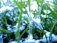 30/30 First Snowfall (Hev-Ding) Tags: snowflake snow macro eye fall up grass 30 mouse close view floor low perspective flake ground days worm snowfall samgung s1050 hevding 30daysontheground