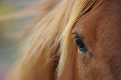Trust (Deby Dixon) Tags: horse eye nature outdoors photography washington travels nikon mood dof wind bokeh adventure explore trust frontpage deby equine allrightsreserved 2011 okanagon naturephotographer debydixon debydixonphotography