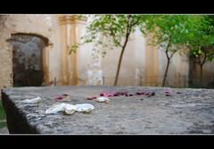 Desde el altar (Un rincon para compartir) Tags: la nikon altar rosas teruel ermita petalos fresneda d3000