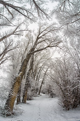 IMGP9477-Edit (Matt_Burt) Tags: trees snow animal frost tracks footprints fisheye cottonwood reach 8mm leaning neversink rokinon