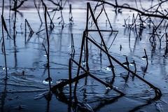 Diamonds (michael_hamburg69) Tags: hamburg germany deutschland photowalkmitmaren öjendorfersee februar february öjendorferpark billstedt öjendorf ice eiskristalle see lake