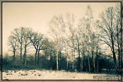 simple winter landscape #2 (dariusz_lipinski) Tags: landscape winter sky trees tree snow beauty beautiful beautyinnature day poland lowersilesia walbrzych quiet