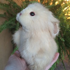 Recycled mink bunny rabbit (kimbearlyoriginal) Tags: rabbit original ooak mink kimbearlys