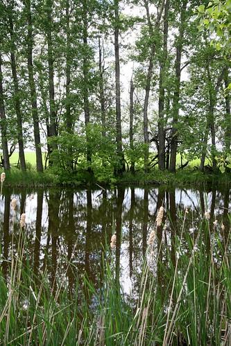 pond-trees
