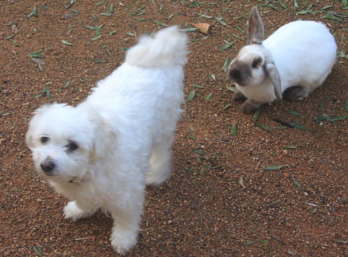 Snowy and Max