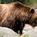Woodland Park Zoo Seattle 075