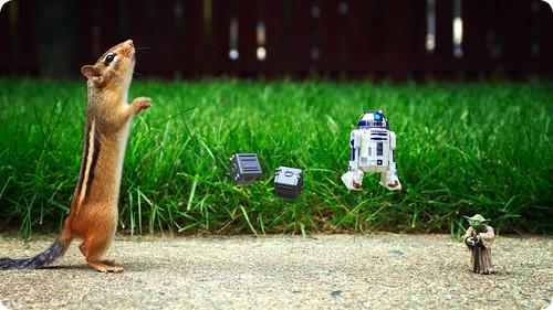 ardilla y Yoda de Star Wars
