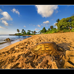 Turtlerama Vertorama (Ryan Eng) Tags: ocean blue trees sky beach water hawaii sand oahu turtle northshore honu haleiwa dri blending presunset sigma1020mm aliibeachpark nikond90 vertorama ryaneng