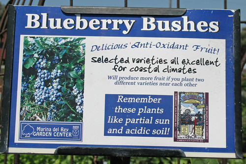 blueberry bushes sign