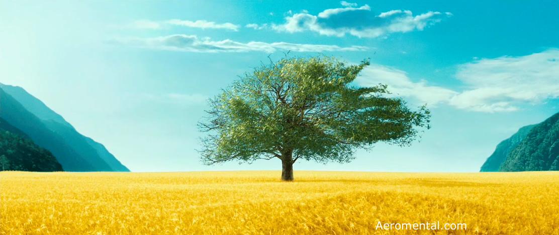 árbol Desde Mi Cielo
