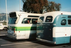 Golden Gate Transit Bus and an old Greyhound Bus (Blue Rave) Tags: blue bus green buses vintage back coach angle metro transport angles transportation transit backside publictransport coaches goldengatetransit motorcoach thecolorgreen gmbuses oldmodelbus