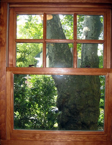 Tips and Benefits of Replacing Old Wood Windows