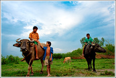My prehistoric childhood [..Dhamrai, Bangladesh..] (Catch the dream) Tags: sky green boys childhood animals cowboys clouds children cow buffalo village child bongo domestic laugh leisure bengal bangladesh bangladeshi dhamrai rakhalcheley ttlpod163 gettyimagesbangladeshq2