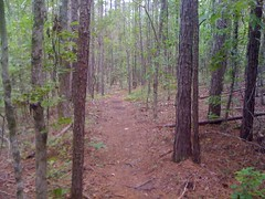 Piney Singletrack