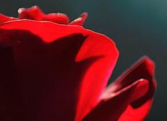 _DSC5312 (pnther60) Tags: backyard roanoke floraandfauna