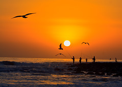 Fishing_Dusty sunrise (Michael Dawes) Tags: ocean camera people beach birds animals silhouette yellow sunrise landscape fishing scenery pacific seagull country scenic australia queensland towns headland 61 goldcoast burleighheads topshots sooc ef100400mmf4556lisusm canon50d mytopshots