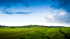 Make mine a double lush west auckland farm-a-tini on ice (Momento Creative) Tags: sunset newzealand sky green grass clouds rural fence golden evening spring nikon sheep naturallight farmland auckland adobe roadside lush nikkor cloudscape lightroom wellsford d90 1685