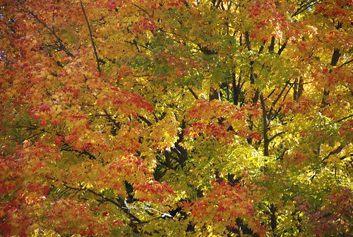 foliage in Camden