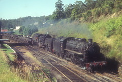 New South Wales Government Railways Baldwin 2-8-2 No 5919 + Beyer Garratt 4-8-4 + 4-8-4 No 6037 on N645 down concentrate train passing through Ourimbah, N.S.W. Australia.