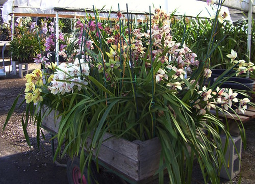 orchid cart