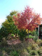 Fall Colors Boulder   DSCN0097