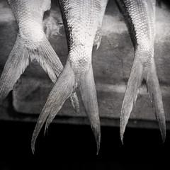 trio (Lieve Van den Bosch) Tags: fish square hongkong blackwhite freshmarket d700 texturesquared