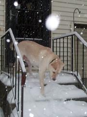 Zeus_snow_12909c