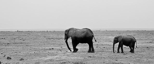 Tusker & Son, Amboseli