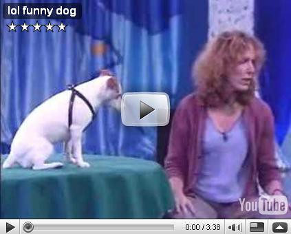 funny dog videos. Funny Dog : Video