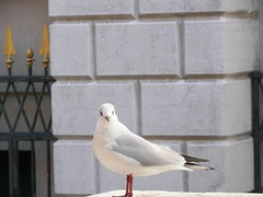 Venise 2009 (Cl. B.) Tags: venice veneza venise venecia venezia venedig  veneti venecija venetsia veneetsia     veneia   veneciji