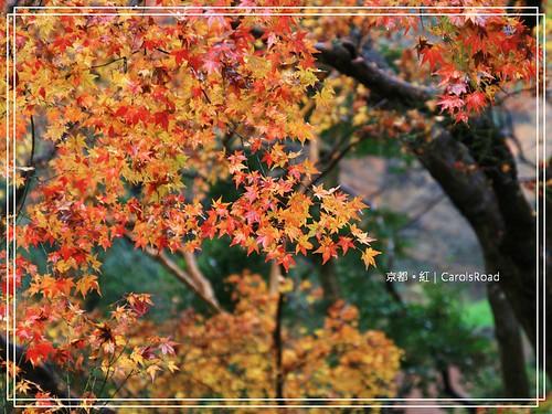 2009-12-11 京都 050 R