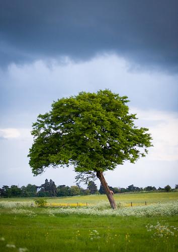 The meadow tree