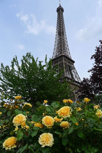 Yellow Roses and Eiffel