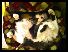 3-12-11 (mkrumm1023) Tags: cat nap kitty lazy