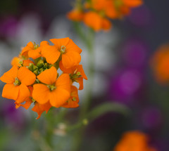 color (SouthernBelladonna) Tags: flowers orange white macro green nature mississippi colorful purple southernbelladonna bokah d0f kimmurrell