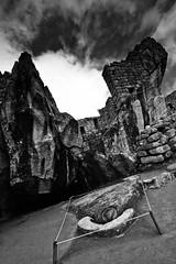Condor in Machu Picchu