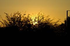 Solnedgång (Toby Mikael) Tags: solnedgång drbyen skymmning solnedgng