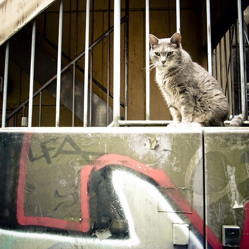 Michan, Shibuya Cat