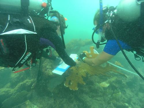 Buzos_midiendo_corales