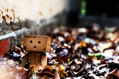 danbo returns (James Green Photography) Tags: brown leaves toy actionfigure 50mm nikon dof bokeh deadleaves f18 18 autmn danbo d40 danboard revoltect