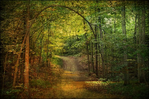 The Path Less Traveled, autumn