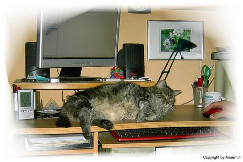 Mein Schreibtischwächter wird wach