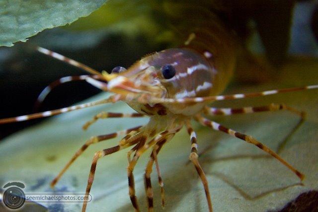 5 San Francisco Aquarium 72009 © Michael Klayman-014