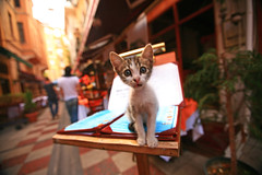 Cat on the Menu (laszlo-photo) Tags: cat turkey menus wideangle istanbul
