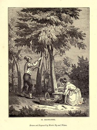 017- El arbol del Maná-One hundred and fifty wood cuts, selected from the Penny magazine 1835