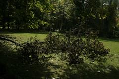 _MG_6496.JPG (zimbablade) Tags: trees sleepyhollow dougmiller videopoem
