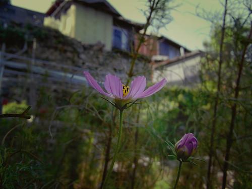 Flower-066-2