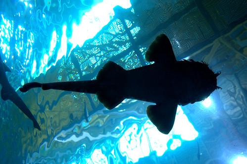 The Georgia Aquarium by Davidlind